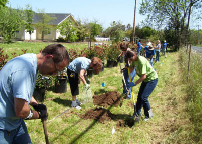 3-volunteers-plant-a-row-of-hedges-at-the-ebc72