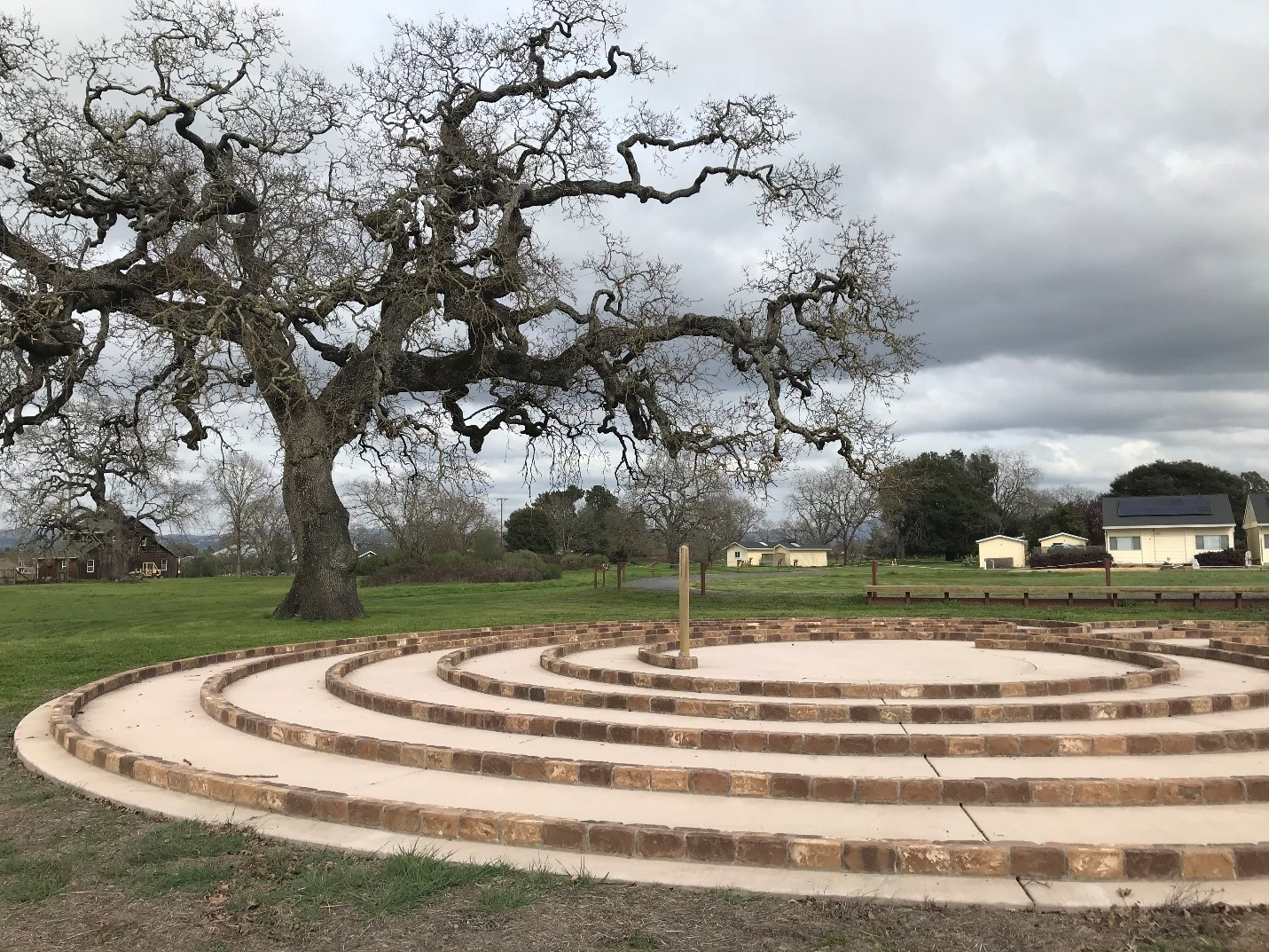 on a cloudy day standing at the far side of the labyrinth with the leaf-less oak on our left we see the labyrinth